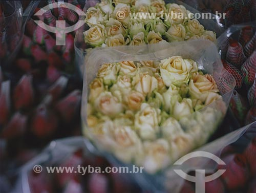 Assunto: Rosas à venda no CEAGESP - Companhia de Entrepostos e Armazéns Gerais de São Paulo / Local: São Paulo (SP) - Brasil / Data: 02/2010