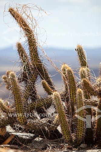 Assunto: Cacto Mandacaru (Cereus jamacaru) vegetação típica do sertão / Local: Quixadá - Ceará (CE) - Brasil / Data: 11/2012