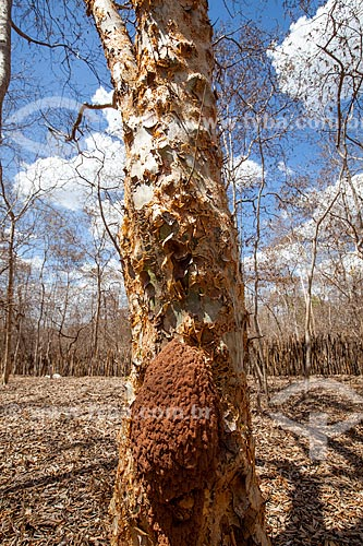 Assunto: Cupinzeiro na Fazenda Não Me Deixes que pertenceu a Rachel de Queiroz / Local: Daniel de Queiroz - Quixadá - Ceará  (CE) - Brasil / Data: 11/2012
