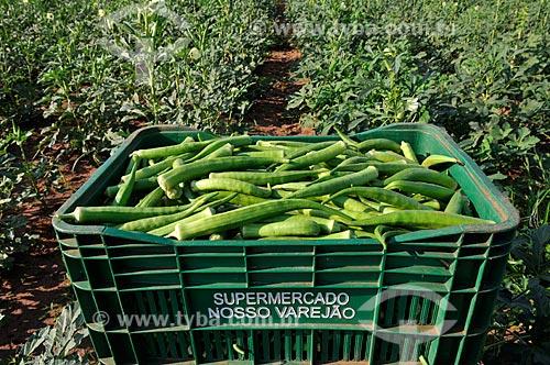 Assunto: Engradado com quiabos / Local: Buritama - São Paulo (SP) - Brasil / Data: 10/2012