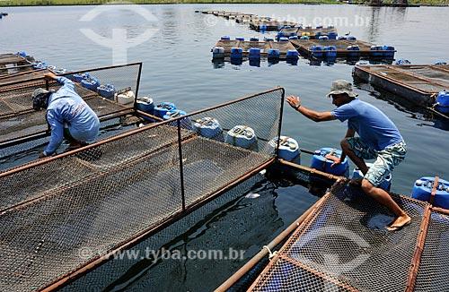 Trabalhadores em tanques-rede usados na criação de Tilápias  - Buritama - São Paulo - Brasil