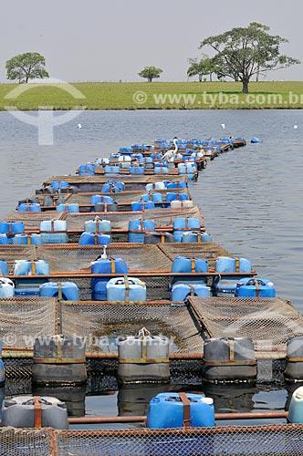 Assunto: Tanques-rede usados na criação de Tilápias / Local: Buritama - São Paulo (SP) - Brasil / Data: 10/2012