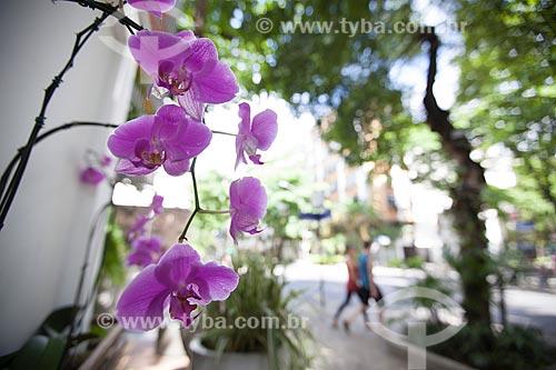 Assunto: Orquídea Phalaenopsis roxa / Local: Ipanema - Rio de Janeiro (RJ) - Brasil / Data: 11/2012