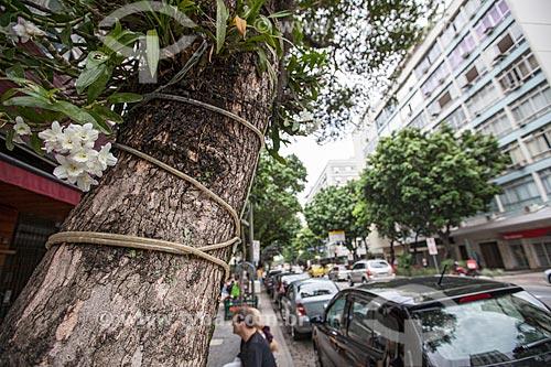 Assunto: Orquídeas Phalaenopsis brancas na rua Dias Ferreira  / Local: Leblon - Rio de Janeiro (RJ) - Brasil / Data: 11/2012