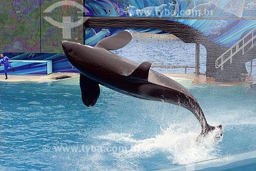 Assunto: Apresentação da baleia Orca Shamu no  Sea World / Local: San Diego - Califórnia - Estados Unidos da América - EUA / Data: 09/2012