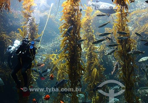 Assunto: Mergulhadores em aquário no Sea World / Local: San Diego - Califórnia - Estados Unidos da América - EUA / Data: 09/2012