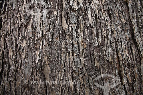 Assunto: Detalhe de tronco de castanheira / Local: Alta Floresta - Mato Grosso (MT) - Brasil / Data: 05/2012