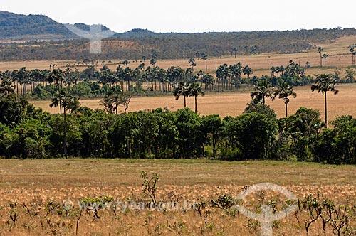 Assunto: Vegetação da Chapada dos Veadeiros / Local: Goiás (GO) - Brasil / Data: 07/2007