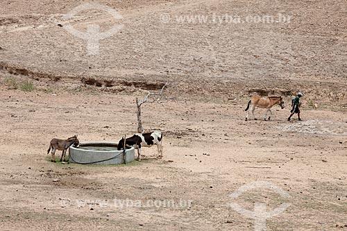 Assunto: Animais bebendo água em um reservatório de água no período da seca no Sítio Pesqueira Velha / Local: Próximo à Arcoverde - Pernambuco (PE) - Brasil / Data: 01/2013
