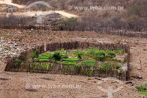 Assunto: Horta de subsistência em Pequena propriedade rural / Local: Canaã - Pernambuco (PE) - Brasil / Data: 01/2013