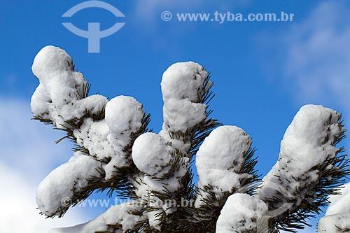Assunto: Árvore coberta de neve / Local: Suiça - Europa / Data: 01/2010