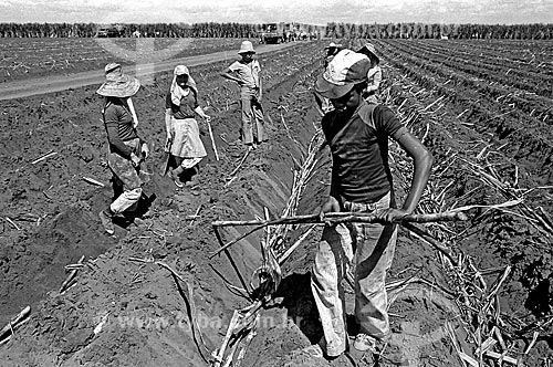 Assunto: Crianças cortando cana-de-açúcar no interior de São Paulo / Local: Sertãozinho - São Paulo (SP) - Brasil / Data: 1980
