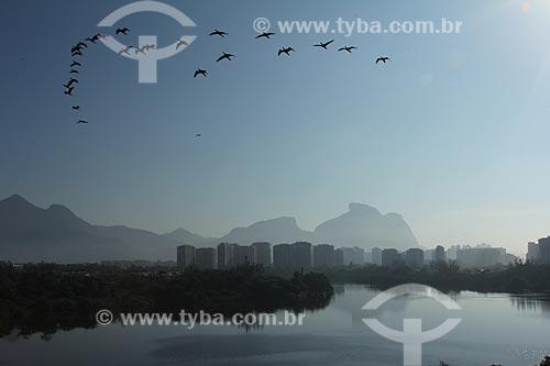 Assunto: Gaivotas voando na Lagoa de Marapendi com prédios e Pedra da Gávea ao fundo / Local: Barra da Tijuca - Rio de Janeiro (RJ) - Brasil / Data: 01/2013