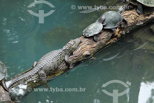 Assunto: Jacaré-do-pantanal (caiman crocodilus yacare) e Tartarugas-da-Amazônia (Podocnemis expansa) em um tronco no Jardim Zoológico do Rio de Janeiro / Local: Rio de Janeiro (RJ) - Brasil / Data: 01/2013