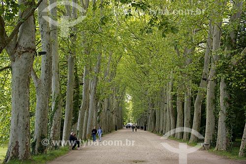 Assunto: Alameda de árvores no Château de Chenonceau (Castelo de Chenonceau) - também conhecido como Castelo das Sete Damas / Local: Indre-et-Loire - França - Europa / Data: 06/2012