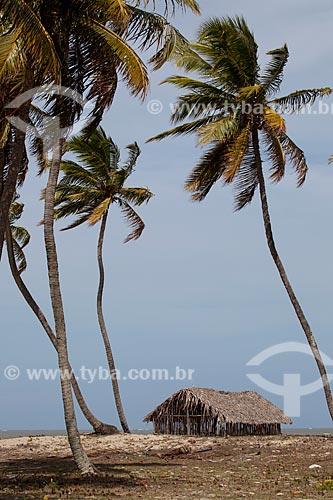 Assunto: Coqueiros e casa de sapê na Praia do Costinha / Local: Lucena - Paraíba (PB) - Brasil / Data: 02/2013