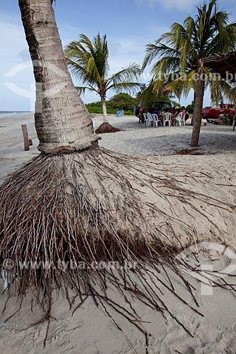 Assunto: Detalhe de raiz de coqueiro na Praia de Costinha / Local: Lucena - Paraíba (PB) - Brasil / Data: 02/2013