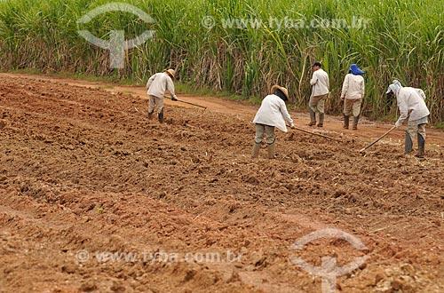 Assunto: Trabalhador Rural arando a terra para o plantio de cana-de-açúcar / Local: Delfinópolis - Minas Gerais (MG) - Brasil / Data: 03/2013