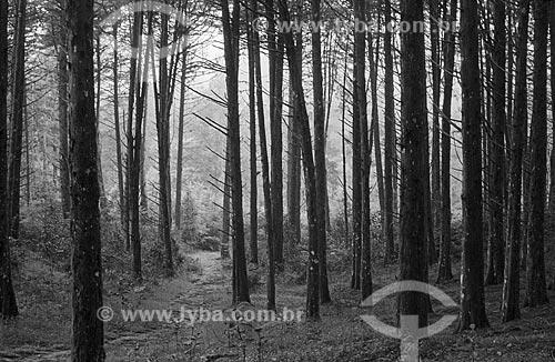 Assunto: Árvores no Parque das Sequóias / Local: Canela - Rio Grande do Sul (RS) - Brasil / Data: 2003