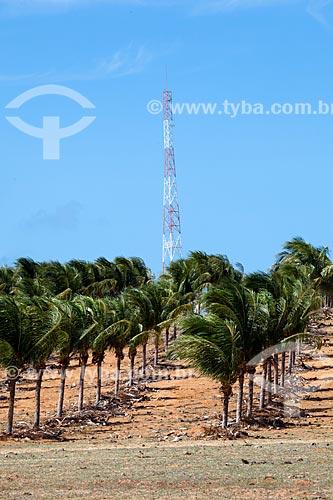 Assunto: Coqueiral e antena da Subestação de Energia de Pipa - Empresa Companhia Energética do Rio Grande do Norte (COSERN) do Grupo Neoenergia / Local: Distrito de Pipa - Tibau do Sul - Rio Grande do Norte (RN) - Brasil / Data: 03/2013