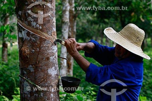 Técnico da EMBRAPA coletando látex de uma plantação experimental de seringueiras da Amazônia  - Itacoatiara - Amazonas - Brasil