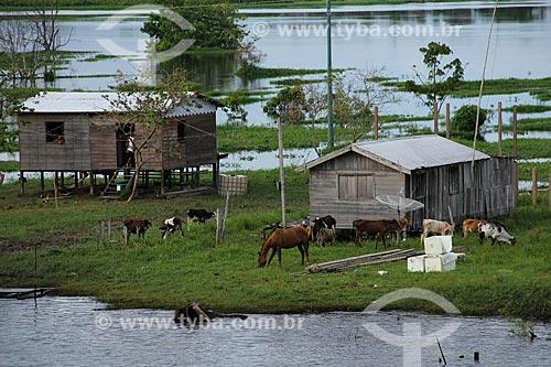 Assunto: Casas às margens do Rio Amazonas próximo à Costa do Tabocal / Local: Manaus - Amazonas (AM) - Brasil / Data: 07/2013
