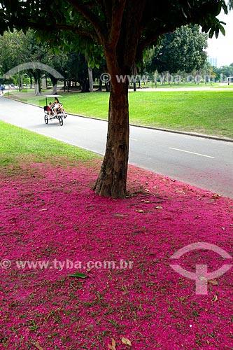 Assunto: Flores de Jambo (Syzygium jambos) no chão ao lado da ciclovia do Parque do Flamengo / Local: Flamengo - Rio de Janeiro (RJ) - Brasil / Data: 04/2013