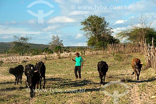 Assunto: Índio da Etnia Kapinawá pastoreando gado na aldeia ou comunidade Colorau no Parque Nacional do Catimbau - imagem licenciada -  ACRÉSCIMO DE 100% SOBRE O VALOR DE TABELA / Local: Buíque - Pernambuco (PE) - Brasil / Data: 06/2013