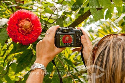 Assunto: Mulher fotografando flor de Sol-da-Bolívia - também conhecido como Chapéu-de-Sol ou Sol-da-Mata - no Jardim Botânico do Rio de Janeiro / Local: Jardim Botânico - Rio de Janeiro (RJ) - Brasil / Data: 08/2011