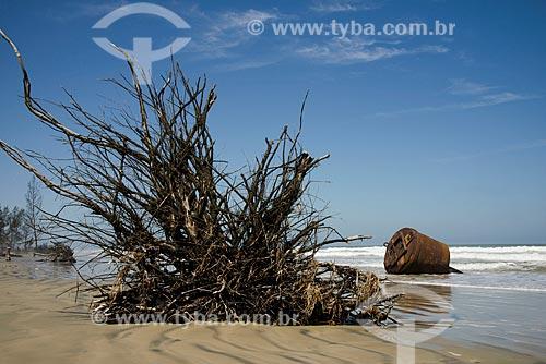Assunto: Raíz de pinheiro derrubado pelo avanço do mar no litoral da Ilha Comprida - Boqueirão Norte / Local: Ilha Comprida - São Paulo (SP) - Brasil / Data: 11/2012