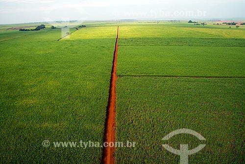 Assunto: Vista aérea de plantação de cana-de-açúcar / Local: Sertãozinho - São Paulo (SP) - Brasil / Data: 05/2013