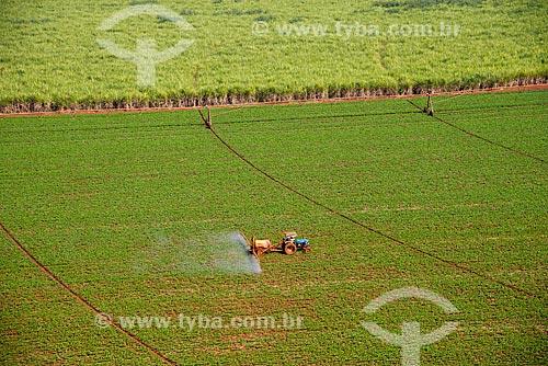 Assunto: Pulverização de pesticida em plantação de feijão / Local: Guaíra - São Paulo (SP) - Brasil / Data: 05/2013
