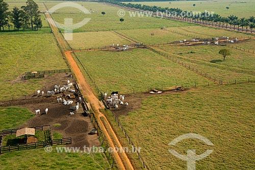 Assunto: Vista aérea do rebanho de gado / Local: Barretos - São Paulo (SP) - Brasil / Data: 05/2013