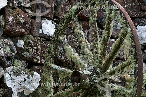 Assunto: Roda de carro de boi coberta por musgos / Local: Campos de Cima da Serra - Rio Grande do Sul (RS) - Brasil / Data: 09/2013