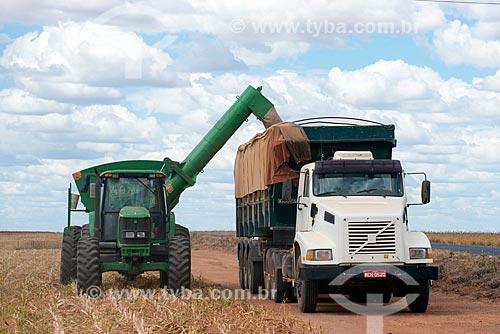 Assunto: Descarga de Sorgo (Sorghum bicolor L. Moench) na zona rural do distrito de Roda Velha / Local: São Desidério - Bahia (BA) - Brasil / Data: 07/2013