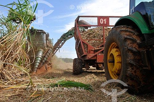 Assunto: Colheita Mecanizada de Cana de Açúcar em zona rural da cidade de Bálsamo / Local: Bálsamo - São Paulo (SP) - Brasil / Data: 09/2013