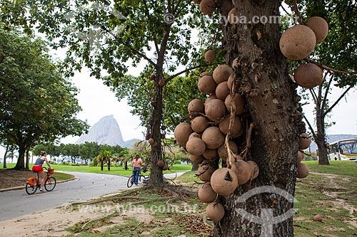 Assunto: Abricó-de-Macaco (Couroupita guianensis) - também conhecida como Macacarecuia - no Aterro do Flamengo com o Pão de Açúcar ao fundo / Local: Flamengo - Rio de Janeiro (RJ) - Brasil / Data: 08/2013