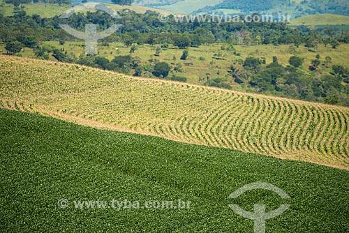 Assunto: Plantação de soja e milho na zona rural de Cascavel / Local: Cascavel - Paraná (PR) - Brasil / Data: 01/2013