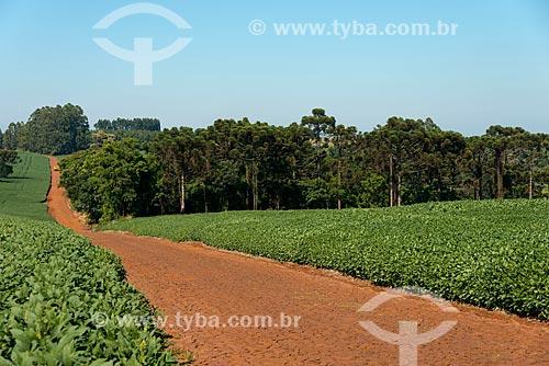 Assunto: Estrada de terra em meio à plantação de soja na zona rural de Cascavel / Local: Cascavel - Paraná (PR) - Brasil / Data: 01/2013