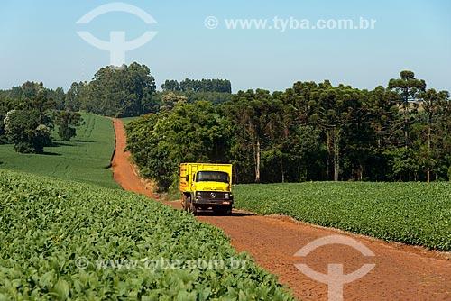 Assunto: Caminhão em estrada de terra em meio à plantação de soja na zona rural de Cascavel / Local: Cascavel - Paraná (PR) - Brasil / Data: 01/2013