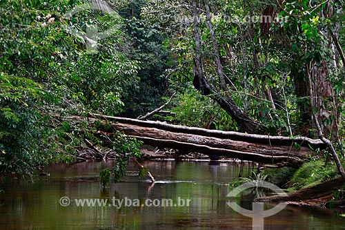 Assunto: Igarapé / Local: Presidente Figueiredo - Amazonas (AM) - Brasil / Data: 10/2013