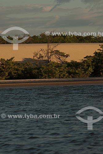 Assunto: Manguezal no Rio Preguiças próximo ao Parque Nacional dos Lençóis Maranhenses / Local: Barreirinhas - Maranhão (MA) - Brasil / Data: 07/2010