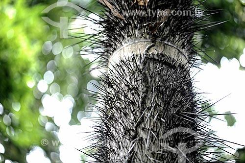 Assunto: Detalhe do tronco de Tucumã (Astrocaryum aculeatum) - também conhecida como Acaiúra ou Tucum / Local: Acre (AC) - Brasil / Data: 05/2013
