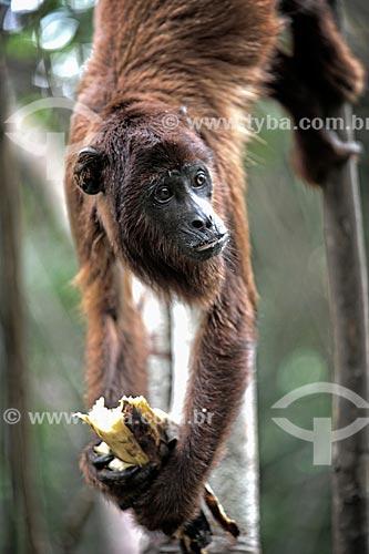Assunto: Macaco no Seringal Cachoeira / Local: Xapuri - Acre (AC) - Brasil / Data: 06/2013