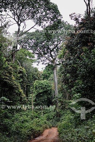Assunto: Estrada de terra no Seringal Cachoeira / Local: Xapuri - Acre (AC) - Brasil / Data: 06/2013