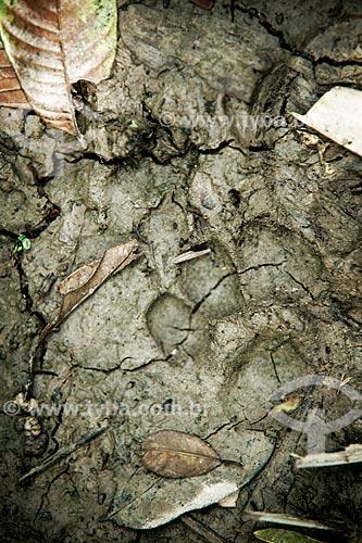 Assunto: Rastro de onça no Seringal Cachoeira / Local: Xapuri - Acre (AC) - Brasil / Data: 05/2013