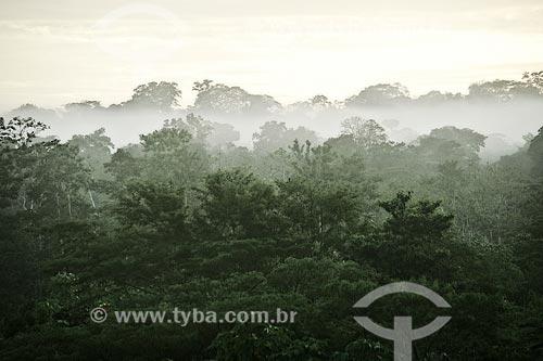 Assunto: Amanhecer na floresta próximo à aldeia Yawanawá / Local: Acre (AC) - Brasil / Data: 04/2013