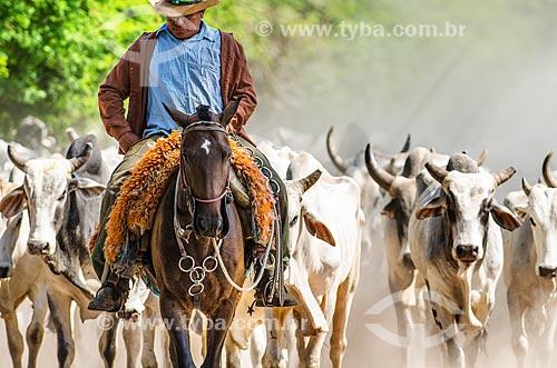 Assunto: Vaqueiro pastoreando gado no Pantanal - próximo ao pantanal do Rio Abobral / Local: Mato Grosso do Sul (MS) - Brasil / Data: 11/2011