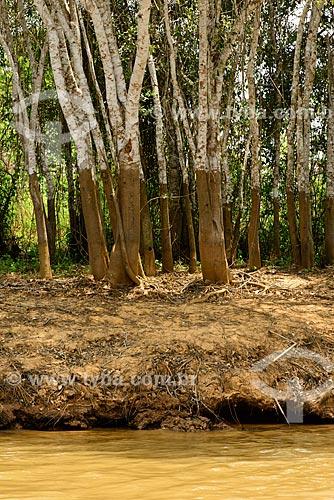 Assunto: Marca da água nas árvores, indicando o nível do Rio Cuiabá na época de cheia / Local: Mato Grosso (MT) - Brasil / Data: 10/2012