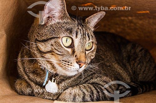Assunto: Gato doméstico (Felis catus)  / Local: Florianópolis - Santa Catarina (SC) - Brasil / Data: 10/2013